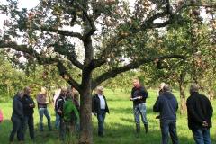 Apfelbaumversteigerung-2017-Urheberrecht-J.Badina