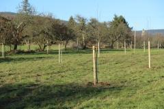 Bäumepflanzaktion-3